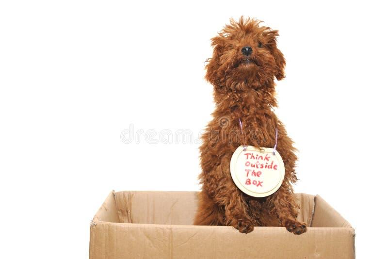 Hund, der außerhalb des Kastens denkt stockfoto