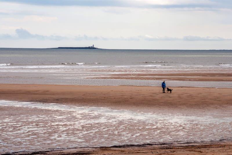 Hund, der auf Alnmouth-Strand geht lizenzfreies stockbild