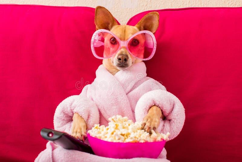 Hund, der auf der Couch fernsieht lizenzfreie stockbilder