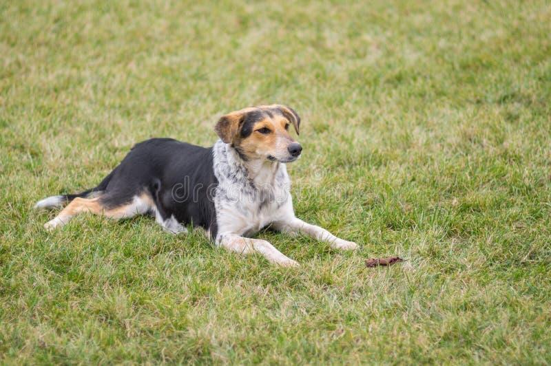 Hund, der auf einem Rasen an der Herbstsaison stillsteht stockfoto