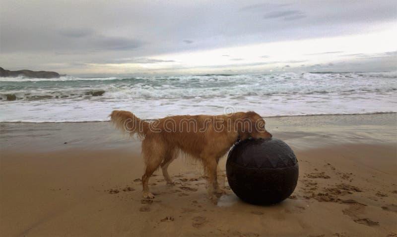 Hund, der auf einem Strand spielt lizenzfreie stockbilder