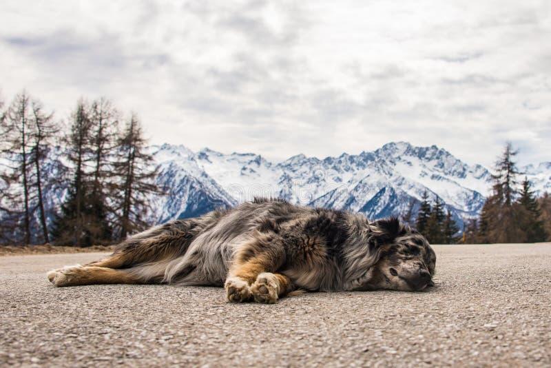 Hund, der auf Gebirgsstraße schläft Schnee-mit einer Kappe bedeckte Berge am Hintergrund stockfoto