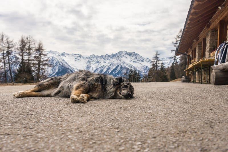 Hund, der auf Gebirgsstra?e schl?ft Schnee-mit einer Kappe bedeckte Berge am Hintergrund lizenzfreie stockfotos