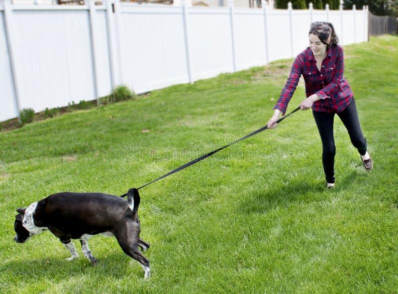 Hund, der auf Leine zieht lizenzfreie stockfotos