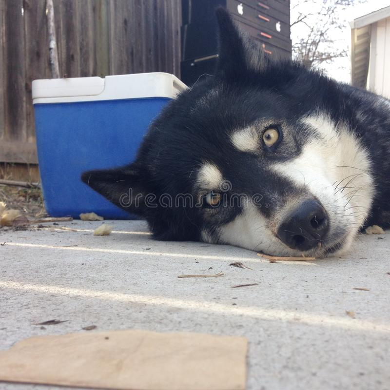 Hund, der auf Pflasterung in der Sonne legt stockbild
