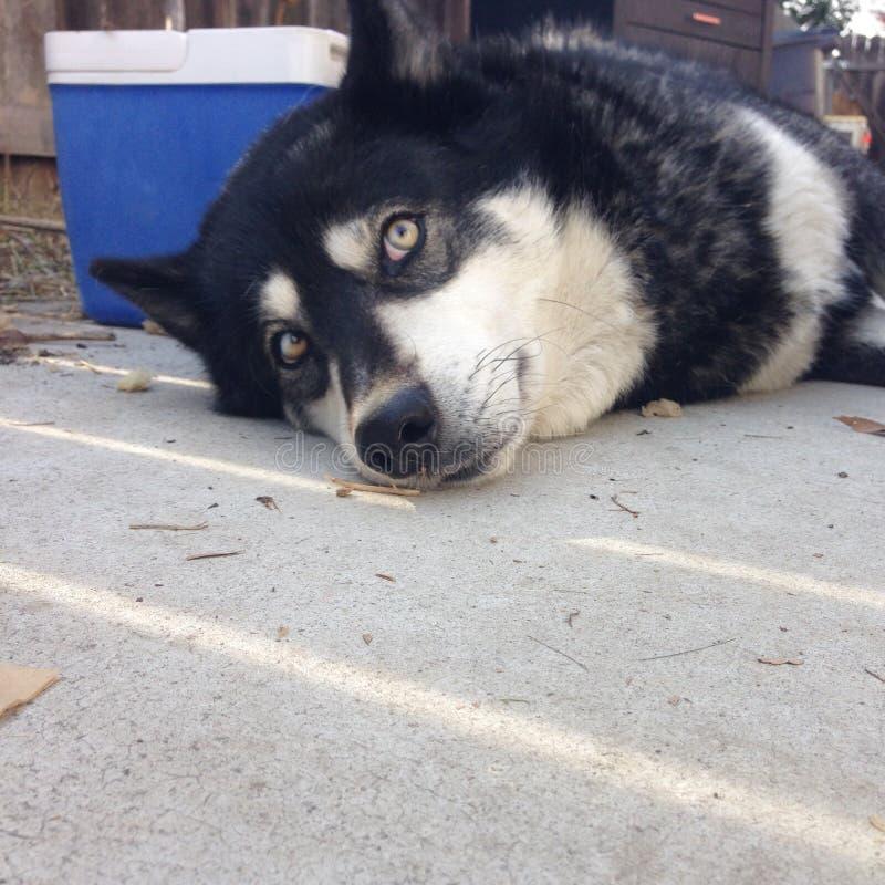 Hund, der auf Pflasterung in der Sonne legt lizenzfreie stockfotos