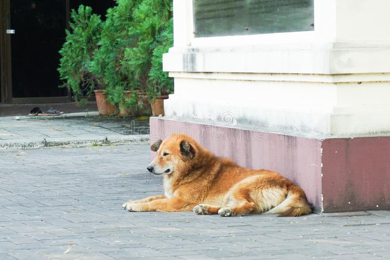 Hund, der auf Straße sitzt stockbild