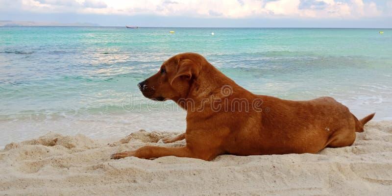 Hund, der auf Strand sitzt stockfotografie