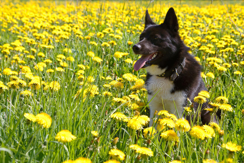 Hund, der auf Wiese sitzt stockbilder
