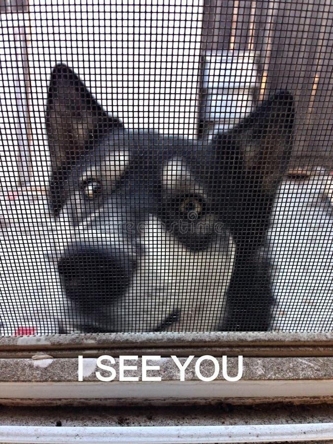 Hund, der aus den Grund legt lizenzfreie stockbilder