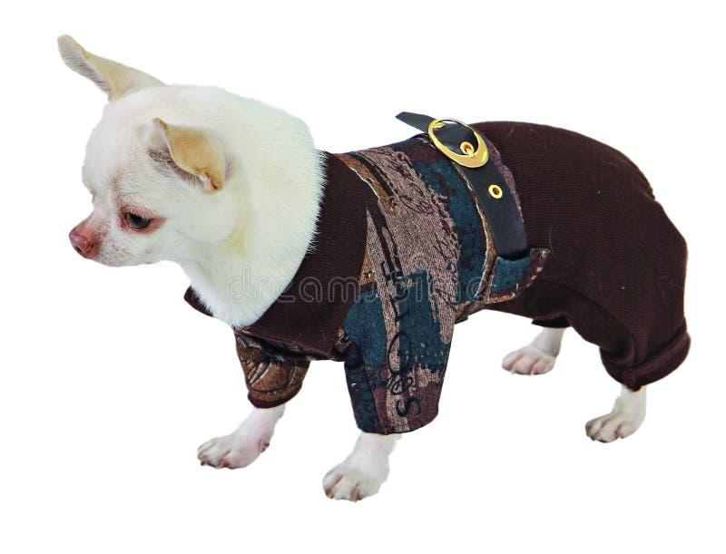 Hund in der braunen Klage lizenzfreies stockfoto