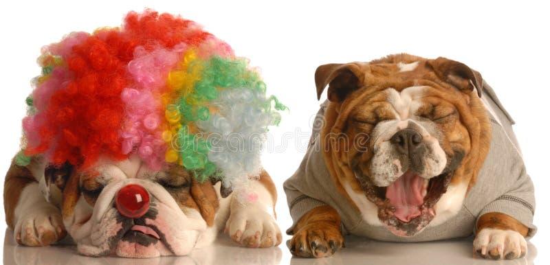 Hund, der am Clown lacht stockfoto