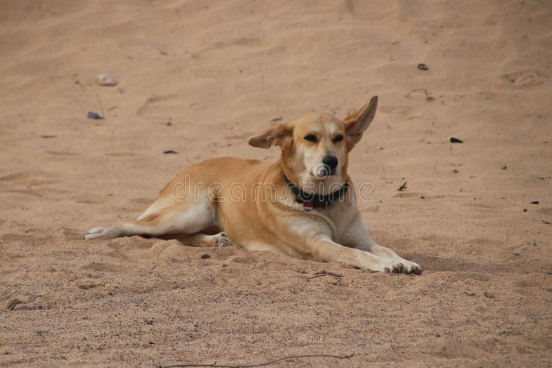 Hund, der in den Sand legt lizenzfreie stockbilder