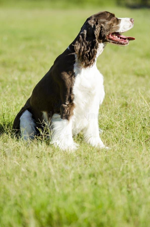 Hund, der in der Sonne sitzt lizenzfreies stockbild