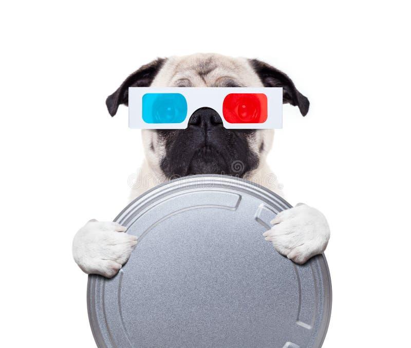Hund, der die Filme aufpasst lizenzfreie stockfotos