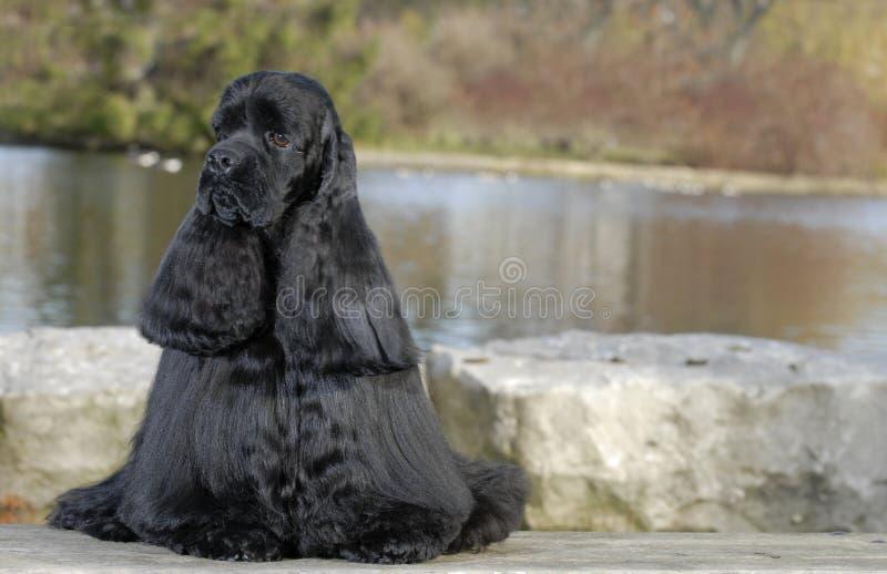 Hund, der durch das Wasser sitzt lizenzfreies stockbild