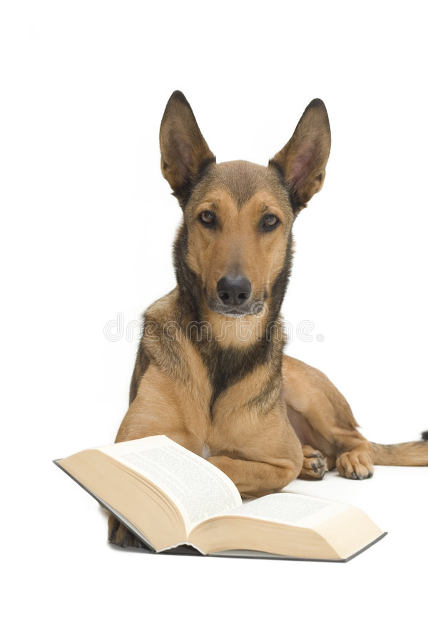 Hund, der ein Buch/eine Bibel liest lizenzfreie stockfotos