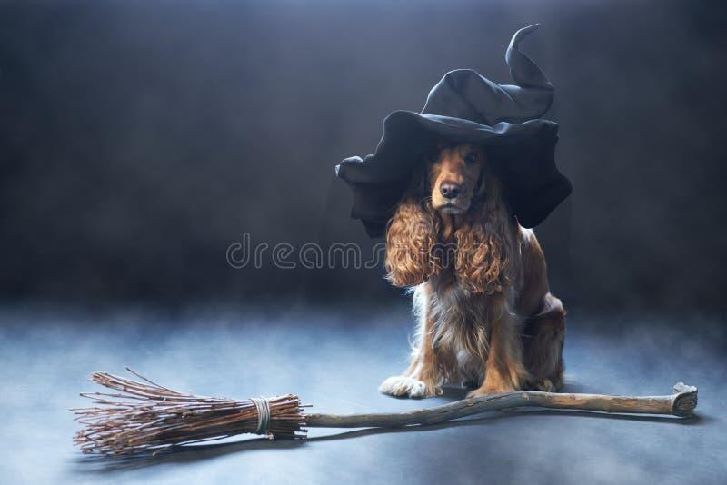 Hund, der in einem Hexenhut sitzt lizenzfreie stockfotos