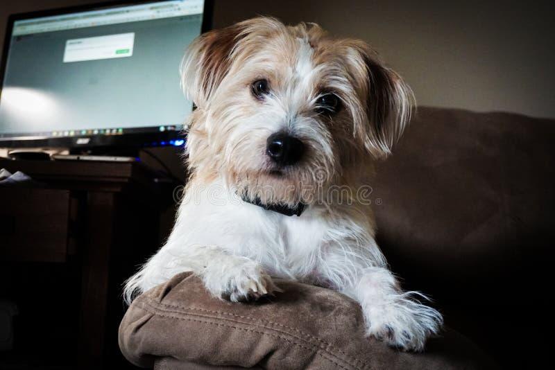 Hund, der einen Kragen trägt lizenzfreies stockfoto