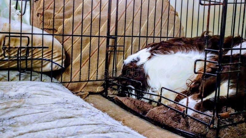 Hund, der in einer Hundehütte schläft stockfotos