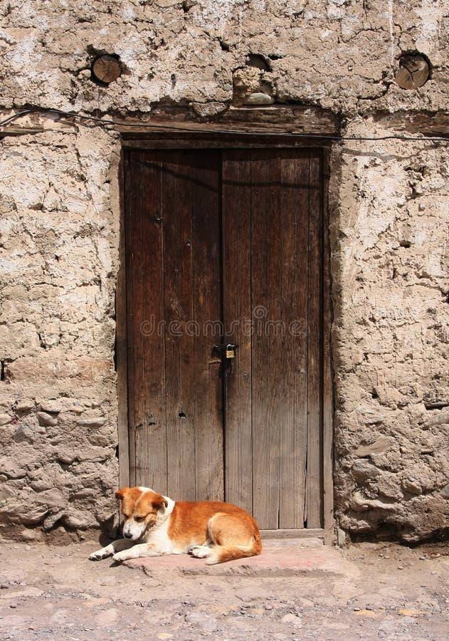 Hund, Der In Einer Tür Stillsteht Stockbilder
