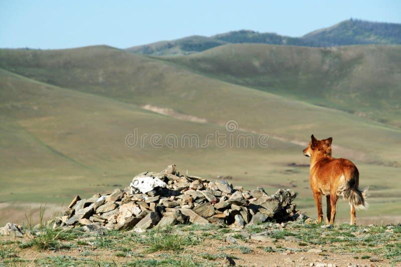 Hund, Der Entlang Des Tales Anstarrt Stockfoto
