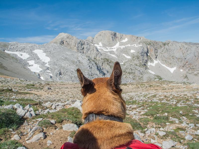 Hund, der Gebirgslandschaft erwägt lizenzfreies stockfoto
