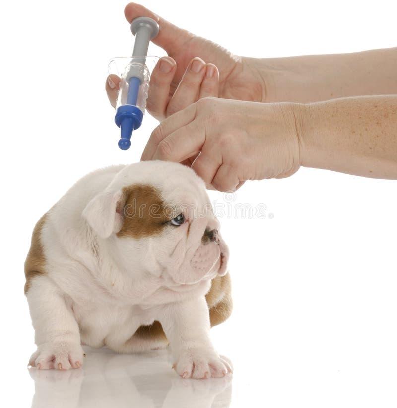 Hund, der geimpft erhält lizenzfreie stockfotografie
