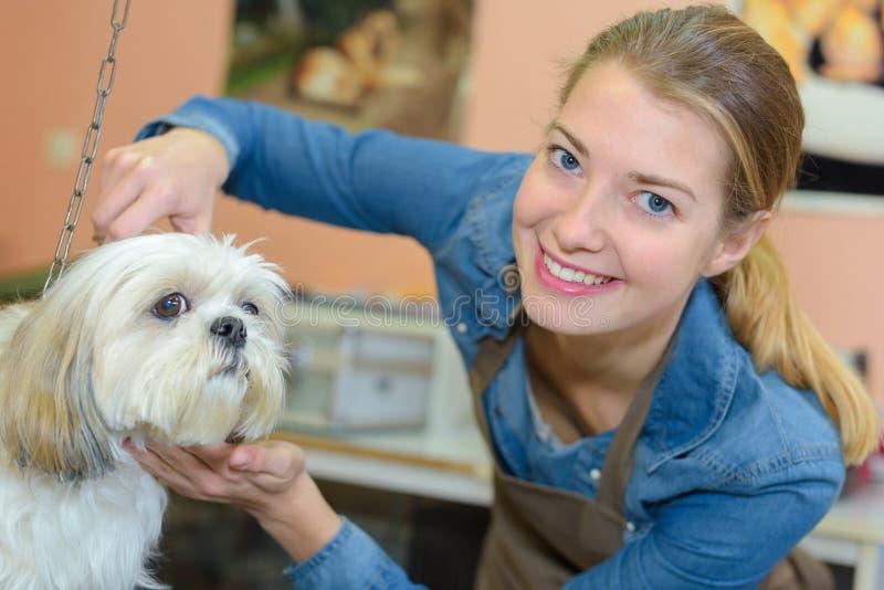 Hund, der Haar geschnitten in Pflegensalon erhält stockbild
