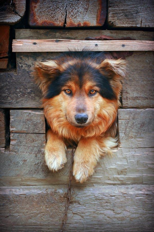 Hund in der Hundehütte lizenzfreie stockfotos