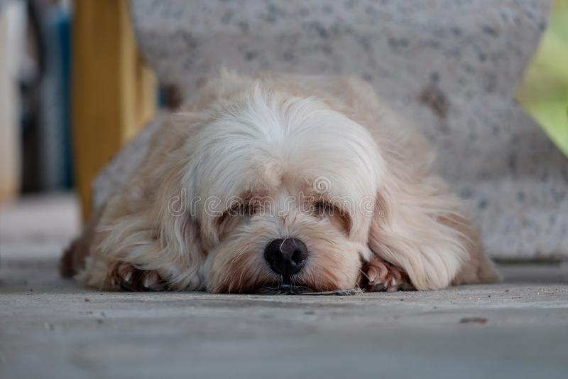 Hund, der jetzt schläft lizenzfreie stockbilder