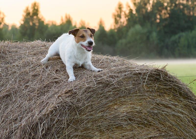 Hund in der Krippe lizenzfreies stockfoto