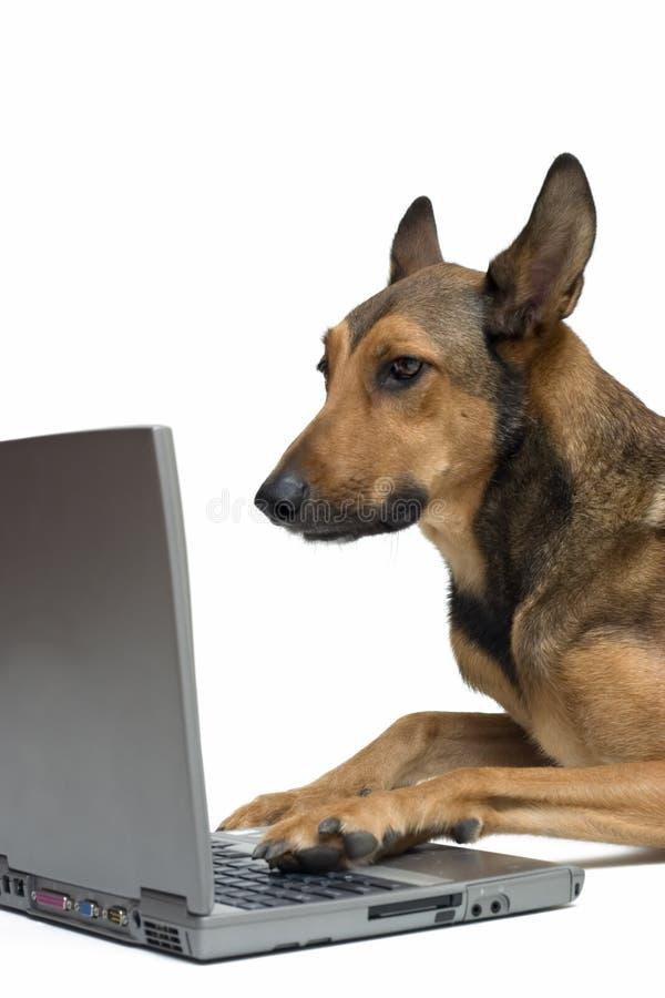 Hund, der an Laptop arbeitet lizenzfreie stockbilder