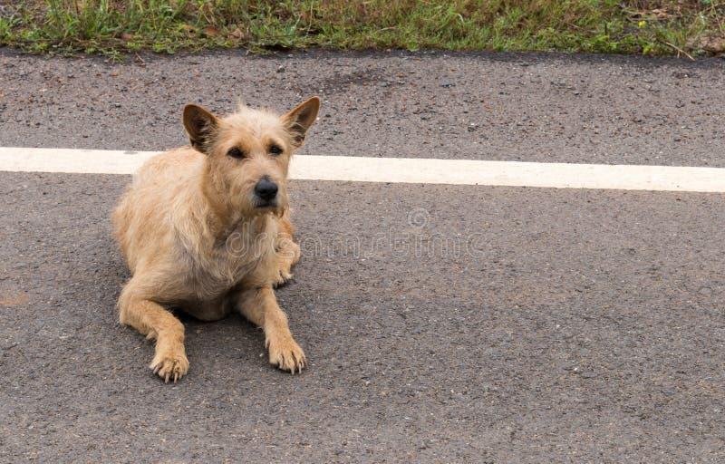 Hund, der neben einer Straße liegt stockfotografie