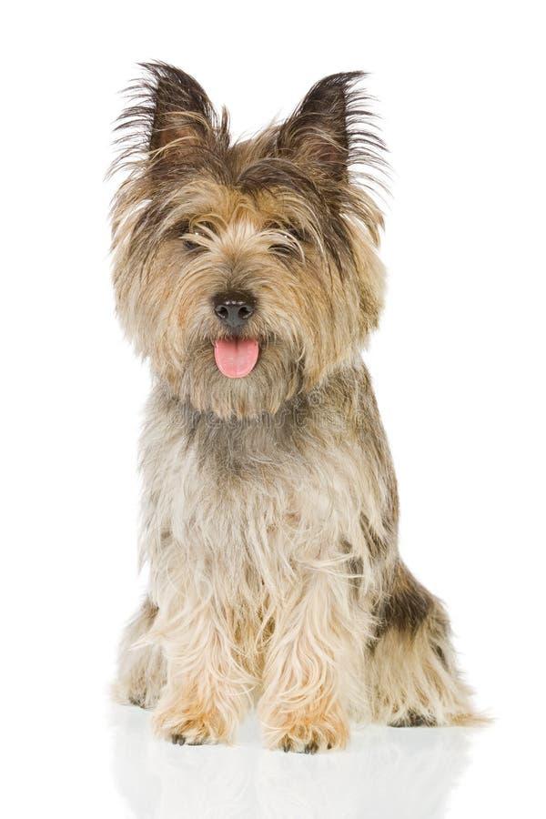 Hund, der oben sitzt lizenzfreie stockbilder
