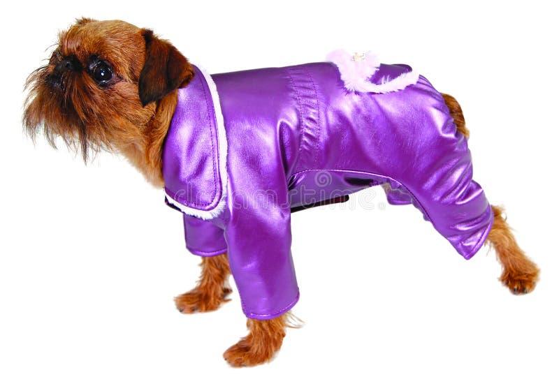 Hund in der purpurroten Klage stockfotografie