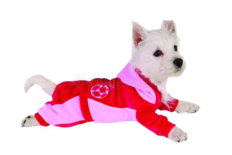 Hund in der roten Klage stockfotografie