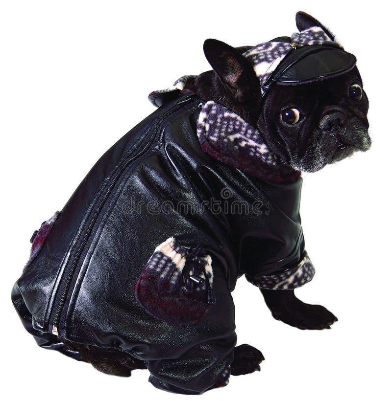 Hund in der Schutzkappe und im Mantel lizenzfreie stockfotografie