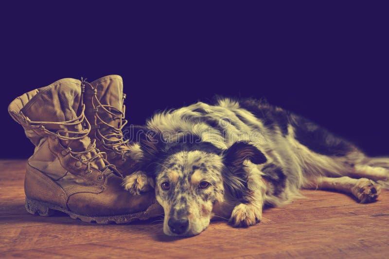 Hund, der sich nahe bei Kampfstiefeln hinlegt lizenzfreie stockbilder