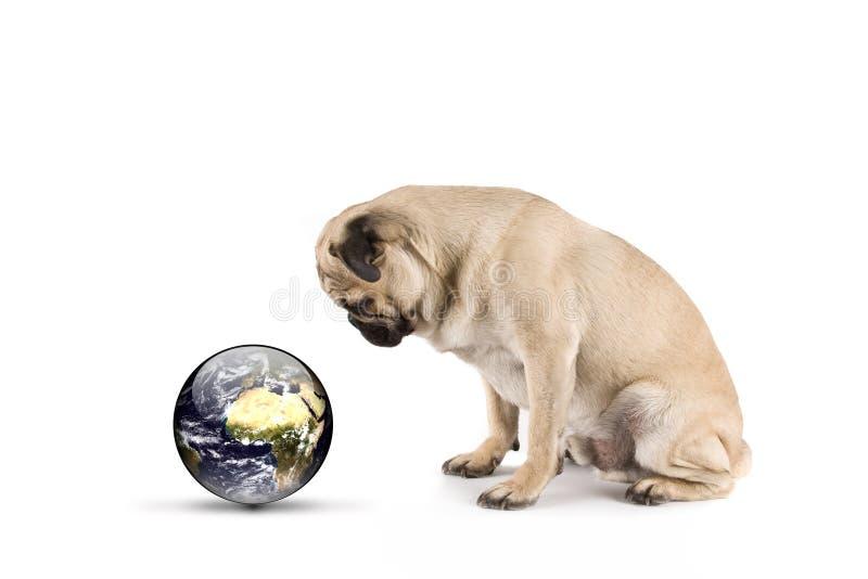 Hund, der unsere Welt überwacht lizenzfreies stockfoto