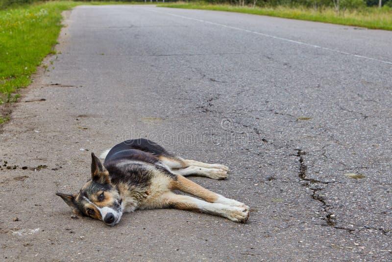 Hund der unsicheren Zucht stillstehend auf der Fahrbahn lizenzfreie stockfotografie