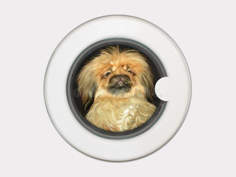 Hund in der Waschmaschine stockfotografie