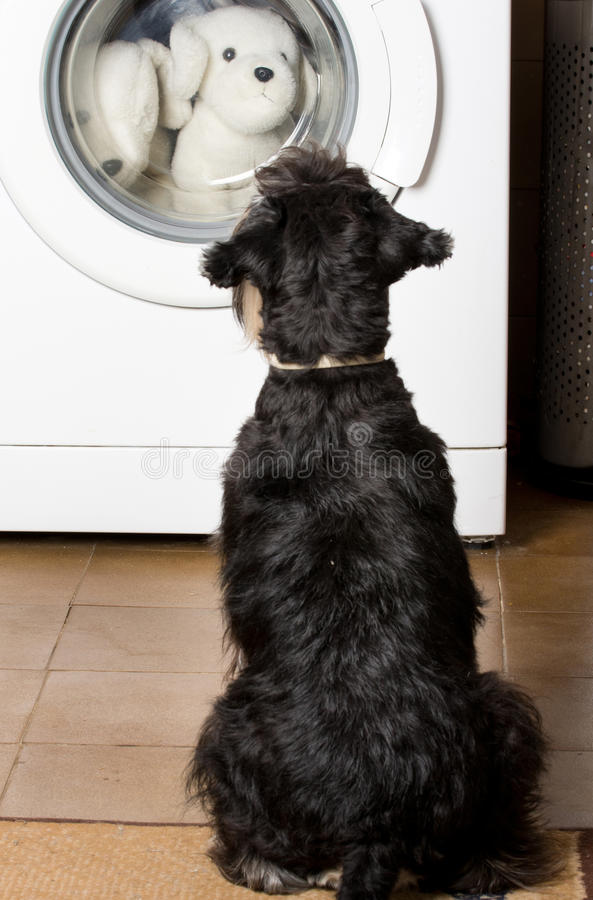Hund, der Waschmaschine betrachtet stockbilder
