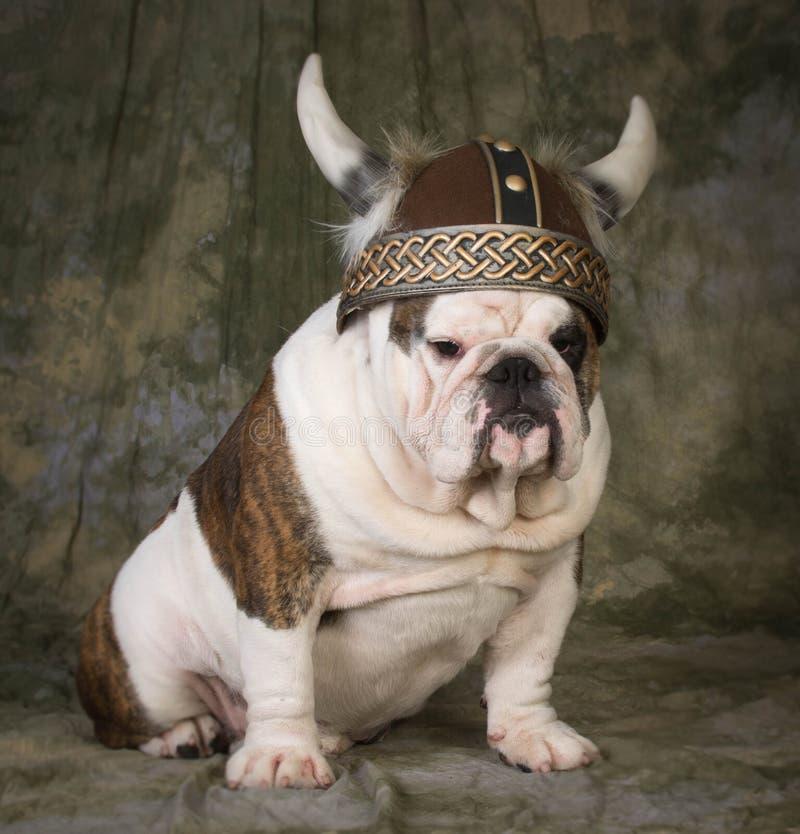Hund, der Wikinger-Hut trägt stockbild