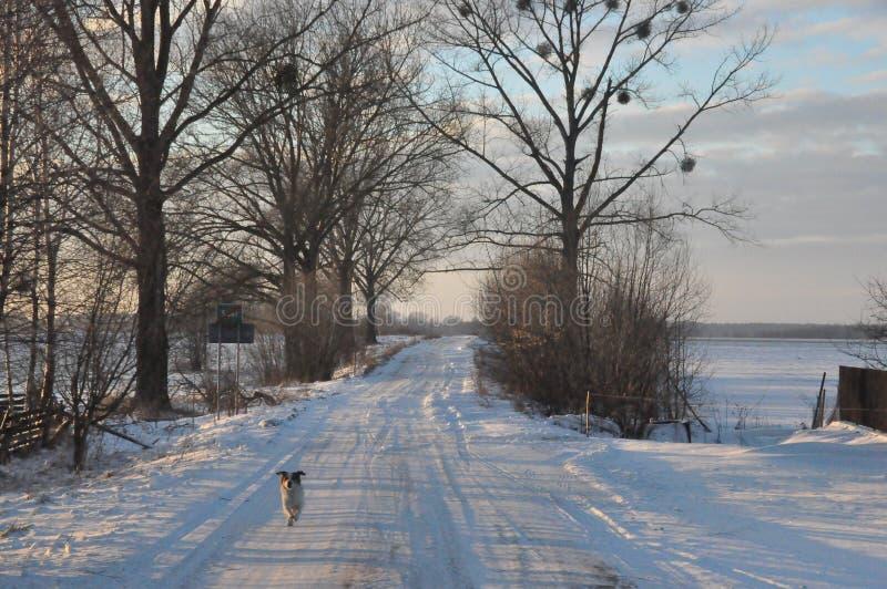 Hund, der zur Linse läuft stockfotografie