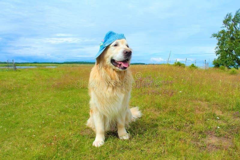 Download Hund Des Goldenen Apportierhunds Stockbild - Bild von landschaft, smiley: 96929817
