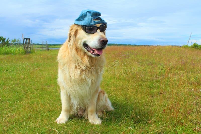 Download Hund Des Goldenen Apportierhunds Stockfoto - Bild von dorf, thoroughbred: 96930170