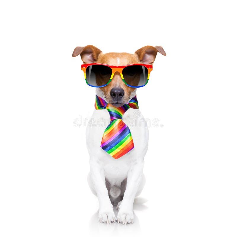 Hund des homosexuellen Stolzes stockfoto