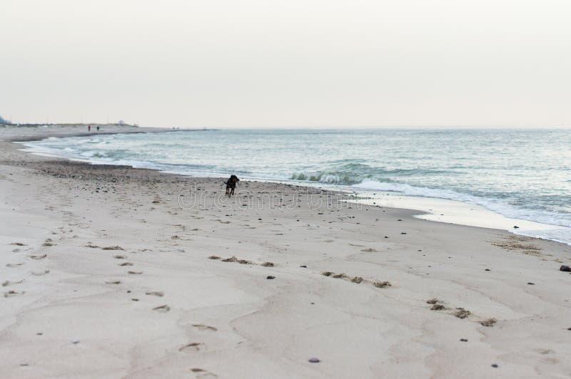 Hund des Meeres 2 stockfotos