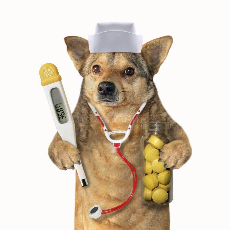 Hund doc med medicinska instrument 2 arkivfoton